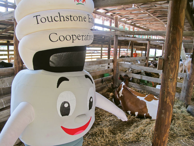 CFL Charlie makes a visit to the livestock barn, as he represents  Shelby Electric Cooperative at the Shelby County Fair.