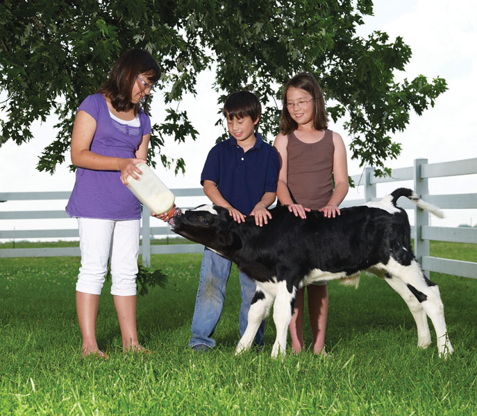 Kids_calf_09-12X12