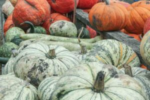 Great-Pumpkin-Patch-011
