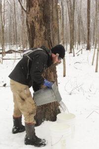 Jonathan helps to collect the sap.