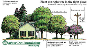righttreeplaceSourceArborDayFoundation
