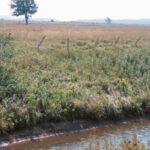 farm-ditch