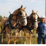 Gascosage Electric Construction Foreman Bill Medlen used his team of Belgian draft horses to string fiber-optic line in a throwback to the early days of rural electrification.