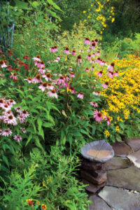 Bird bath in a garden of flowers planted to attract birds and butterflies, New York, USA. Plants include Black-eyed Susans, Purple Coneflowers, Butterfly Weed, Bee Balm, Jewelweed.