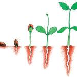PlantGrowingHC0803_M_150_C_Y
