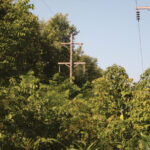 Illinois electric cooperatives own and maintain 56,000 miles of right-of-way and trees and power lines like this don't mix. They cause outages and even worse — safety issues. Make sure your children know that climbing trees near power lines is extremely dangerous.