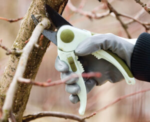 Hand wearing gloves pruning a tree branch