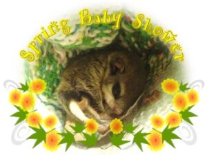 Spring Baby Shower @ Spring Baby Shower