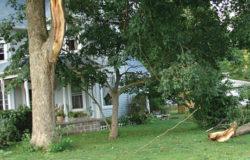 Fallen tree limb near white house