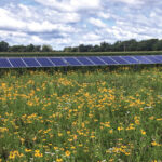 Pollinator Garden_by solar panels
