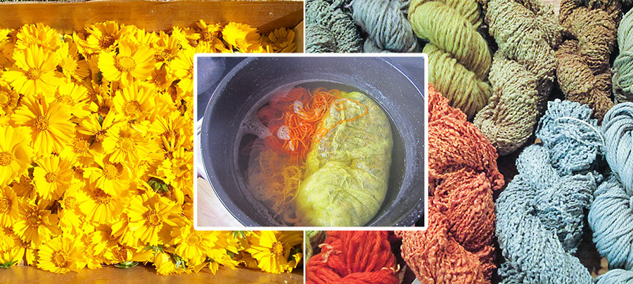 Yellow flowers used as dye for yarn
