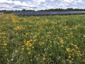 Pollinator-Garden-Downsville-Solar