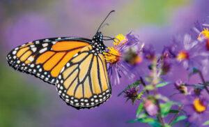 Garden for butterflies